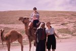 jy and jb camel  kathy and owner
