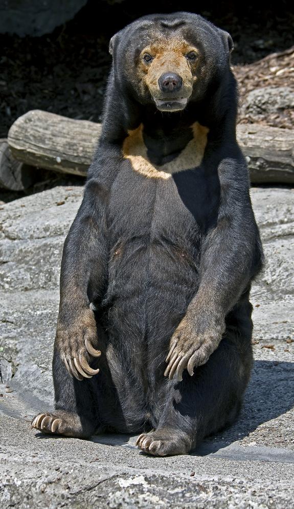 honey-bear