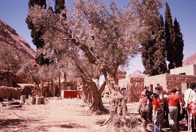 mt sinai tree and group pg